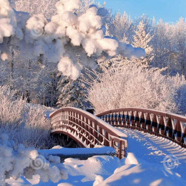 5 tips for cold weather photography.......